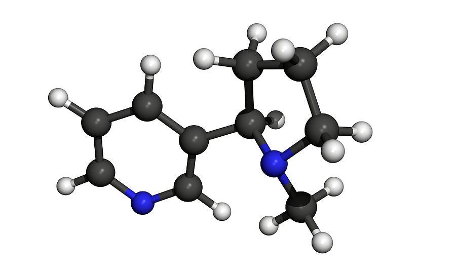 Nicotine Molecule Photograph by Friedrich Saurer