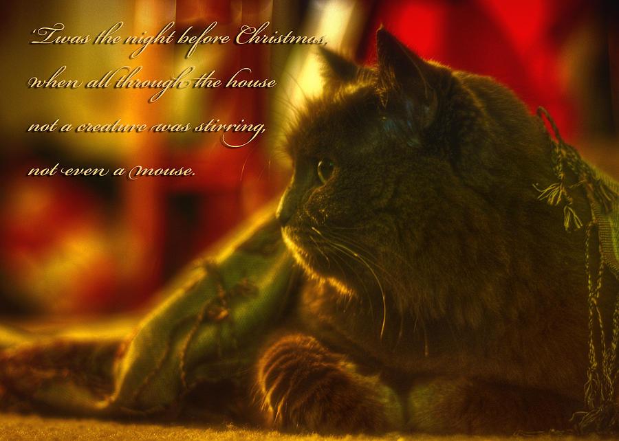 Cat Photograph - Night Before Christmas... by Joann Vitali