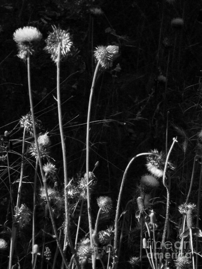 Black And White Photograph - Night Dance by Joe Jake Pratt