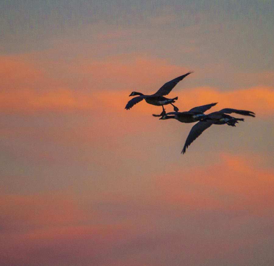 Spring Framed Prints Photograph - Night Flight by Joshua Dwyer