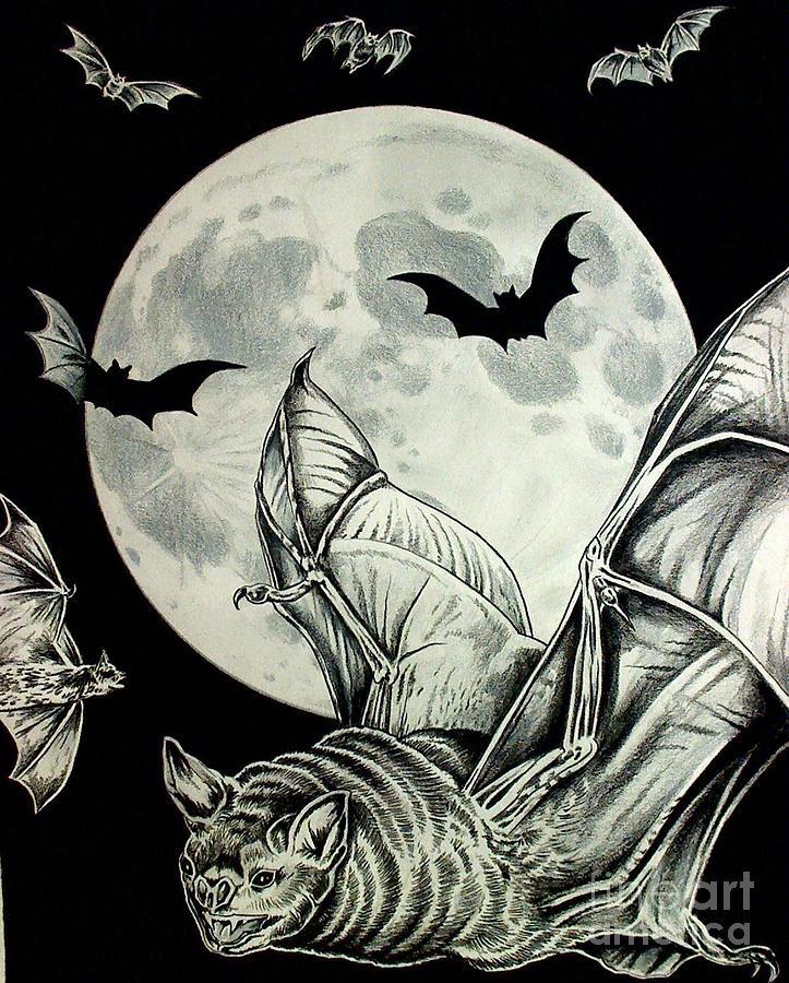 Bats Drawing - Night Flight by Kimberlee  Ketterman Edgar
