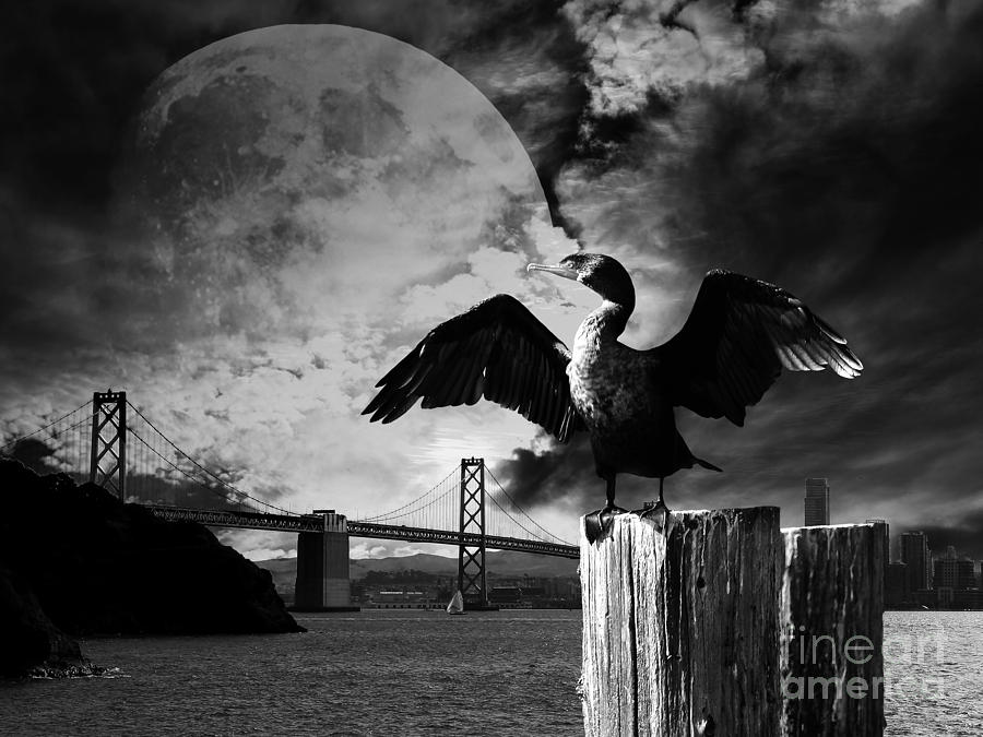 Halloween photograph night of the cormorant black and white by wingsdomain art and photography