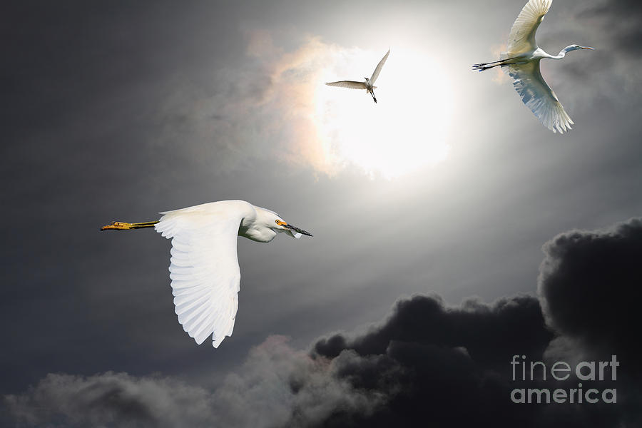 Surreal Photograph - Night Of The White Egrets by Wingsdomain Art and Photography