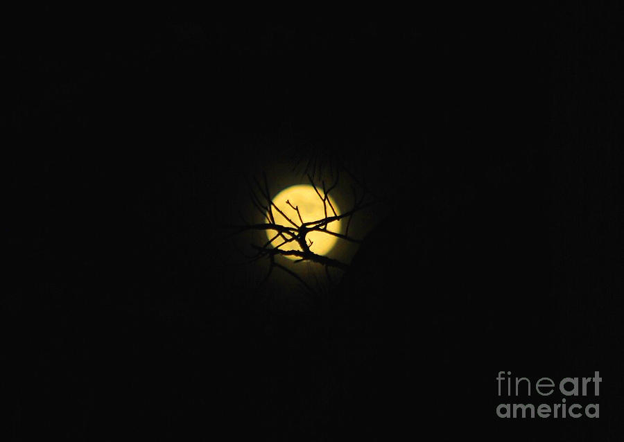 Moon Photograph - Night Sky In The Woods by Monica Poole