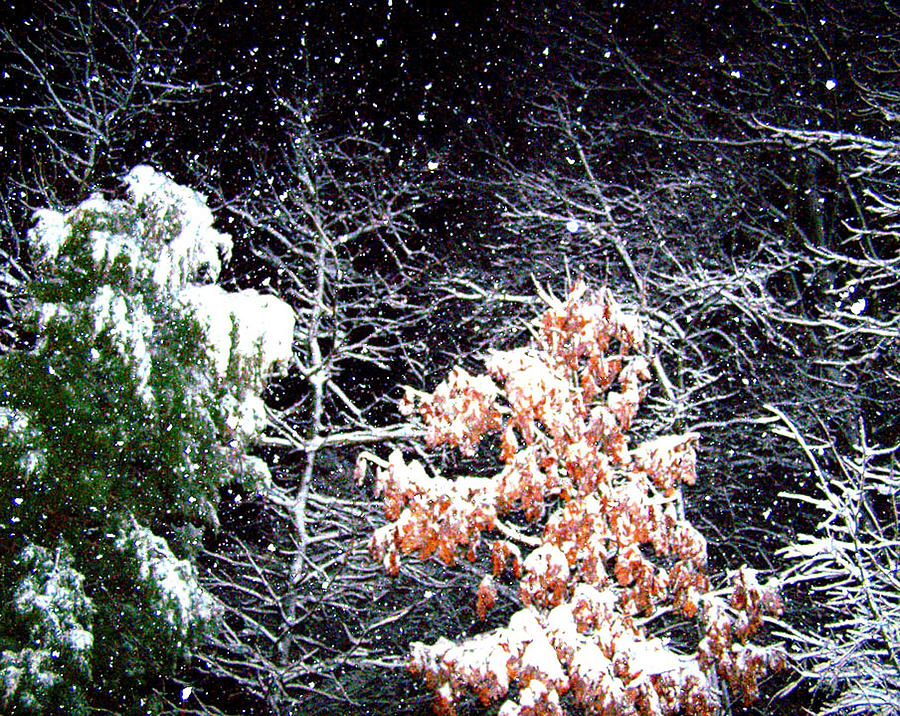Snow Photograph - Night Snow 2 by Sandi OReilly