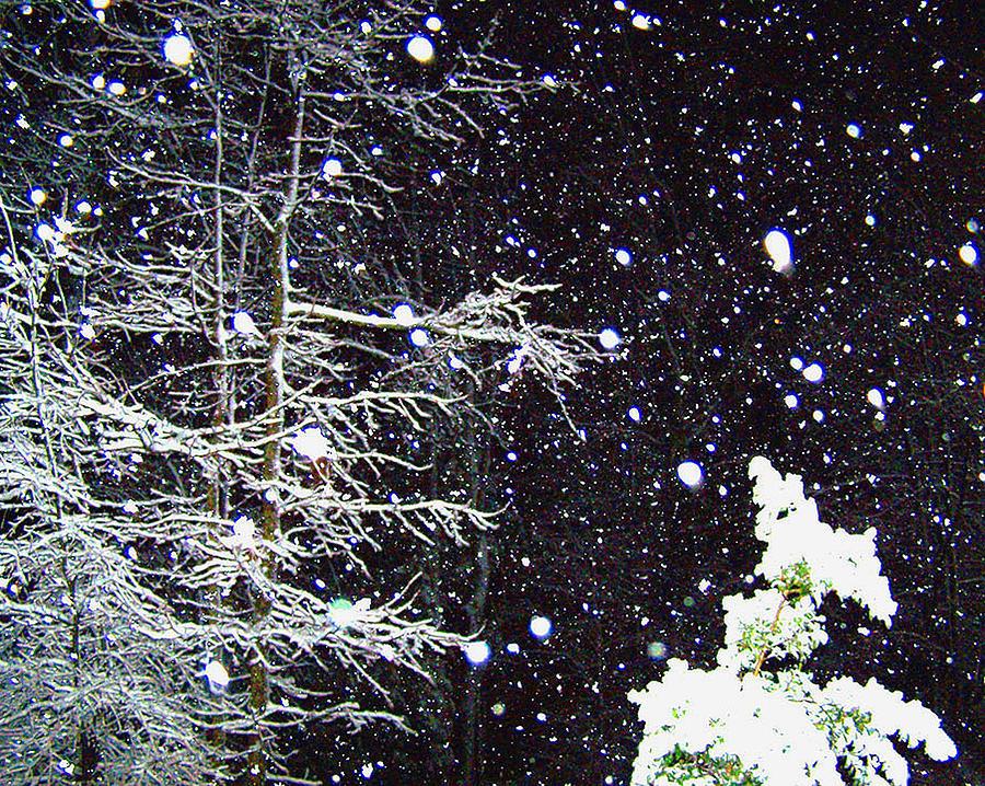 Snow Photograph - Night Snow by Sandi OReilly