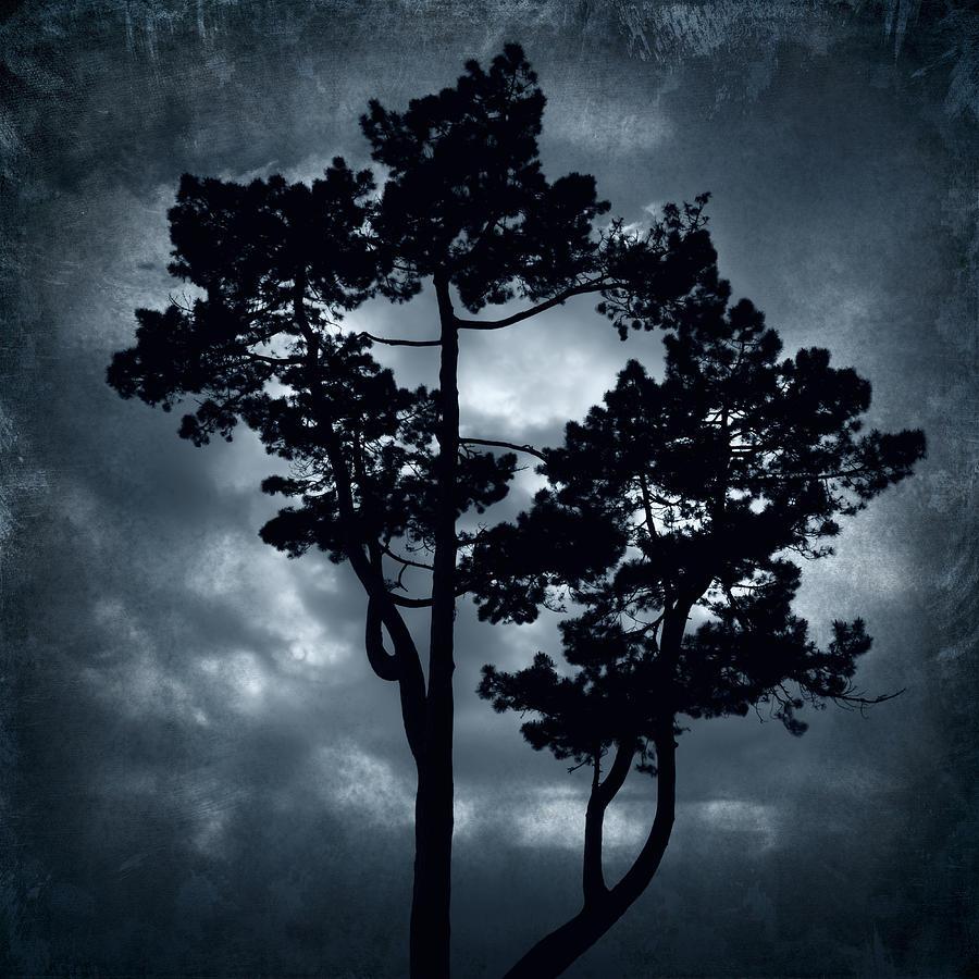 Beautiful Photograph - Night Tree by Svetlana Sewell