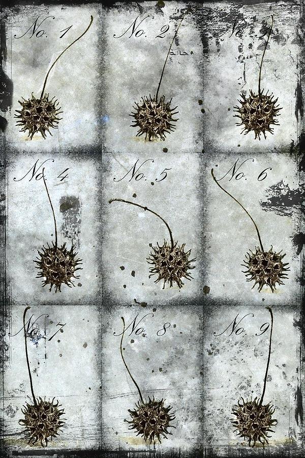 Nine Photograph - Nine Seed Pods by Carol Leigh