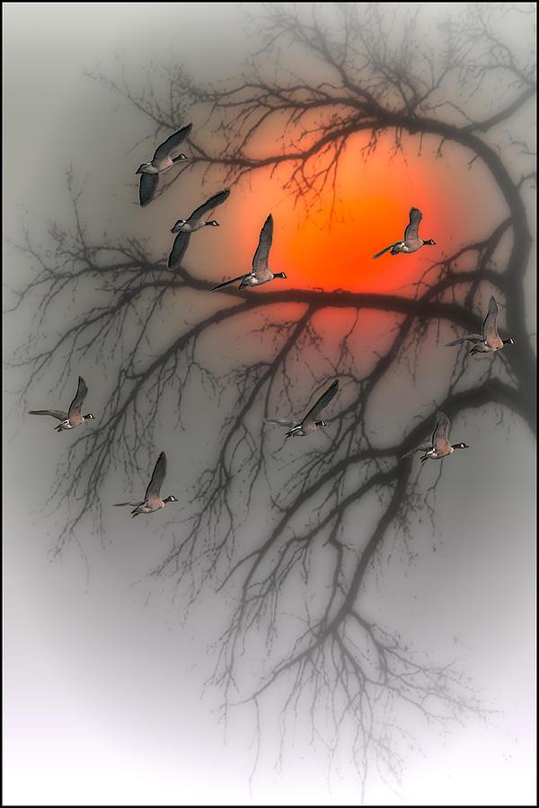 Birds Photograph - Nine Tonight by Tom York Images