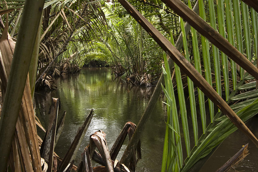 Outdoors Photograph - Nipa Palms Line A Channel by Tim Laman