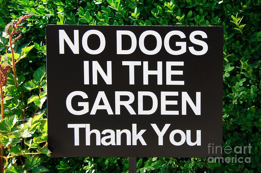 No Dogs In The Garden Thank You Photograph - No Dogs In The Garden Thank You by Andee Design