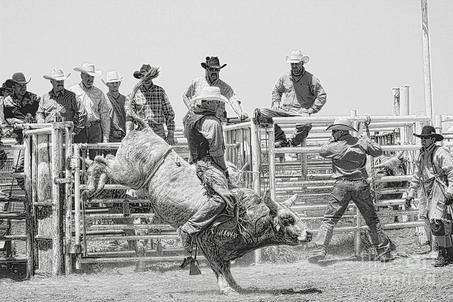 Cowboy Photograph - No Fear In Black And White by Rachelle Rice