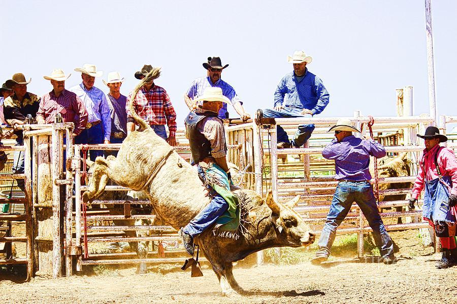 Cowboy Photograph - No Fear by Rachelle Rice