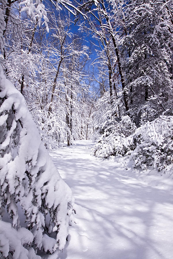 Forest Paths Photograph - No Footprints by Rob Travis