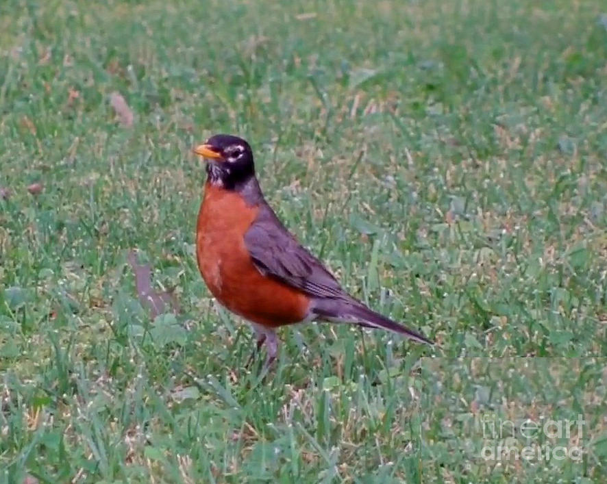 Nature Photograph - No Im Not Robin Hood  by John From CNY