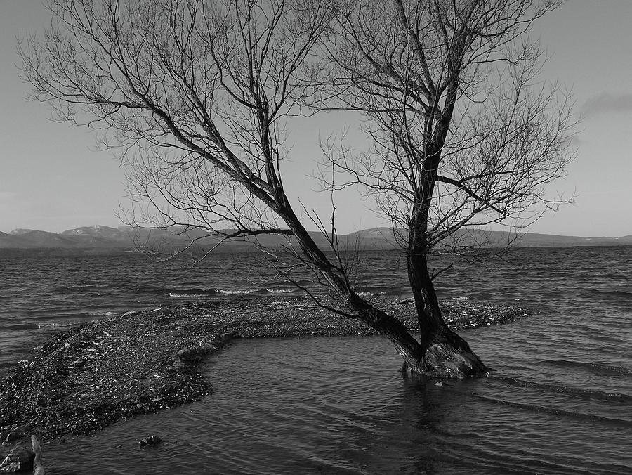 Black And White Photograph - No Tree Is An Island by Jeff Moose