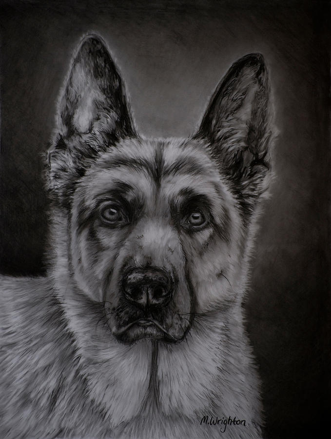 Noble German Shepherd Dog Painting By Michelle Wrighton