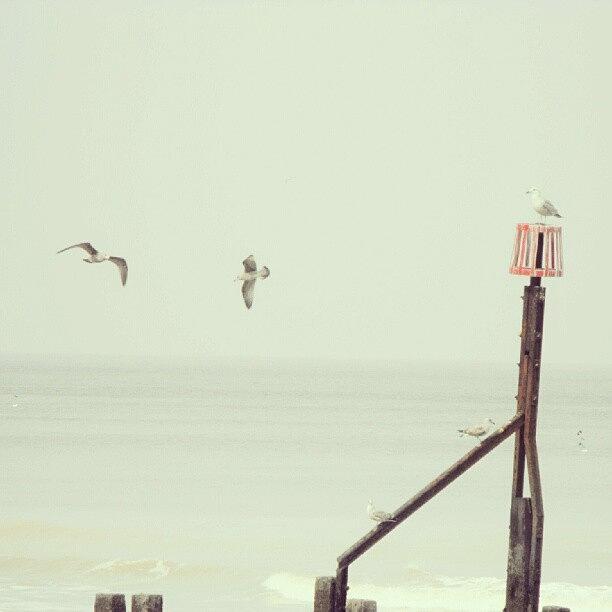 Flying Photograph - #norfolk #seagulls... #latergram #birds by Alexandra Cook