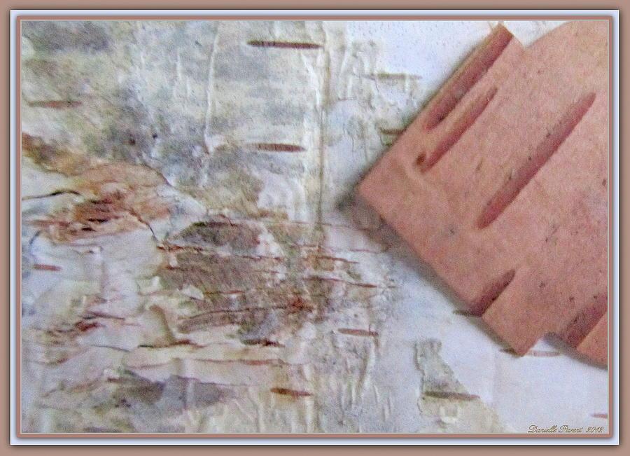 Paper Prints Photograph - Normands  Birch Bark  by Danielle  Parent