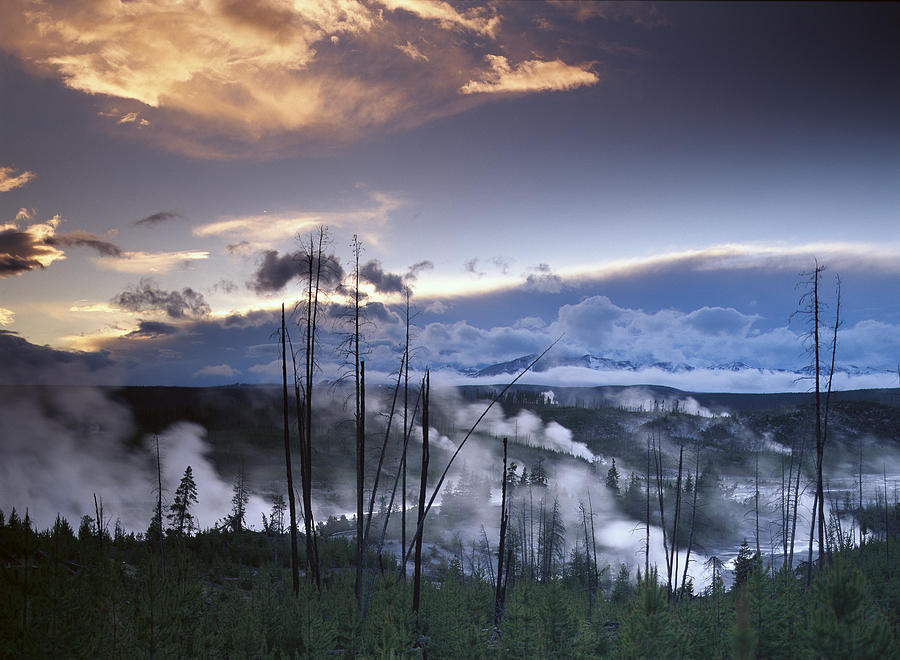 Norris Geyser Basin With Steam Plumes Photograph by Tim Fitzharris