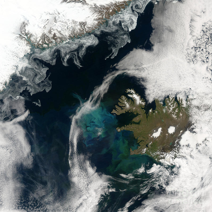 Phytoplankton Photograph - North Atlantic Bloom by Science Source