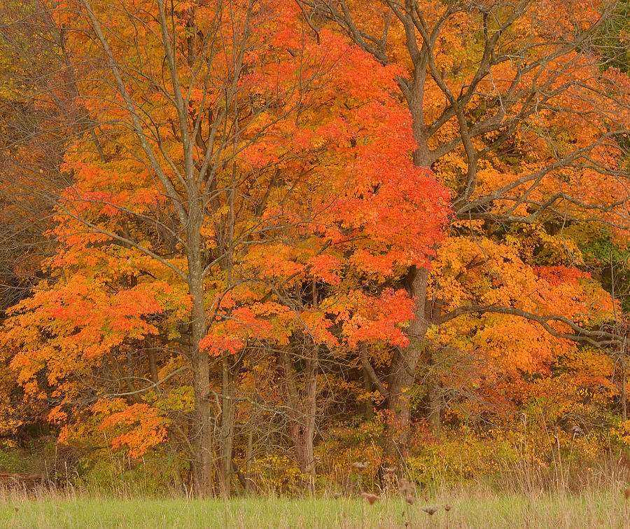 Northern New Jersey Photograph - Northeast Fall Colors by Stephen  Vecchiotti