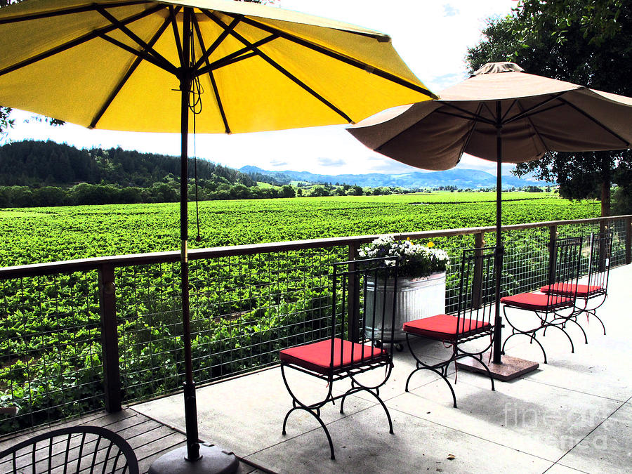 Vines Photograph - Northern Ca Wineries by Leslie Hunziker