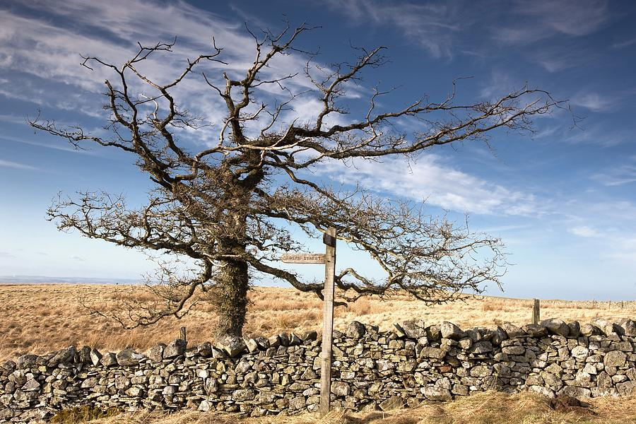 England Photograph - Northumberland, England A Leafless Tree by John Short