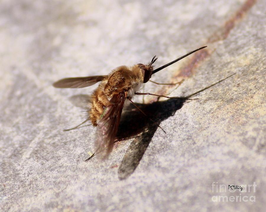 Fly Photograph - Nosy Bug by Patrick Witz