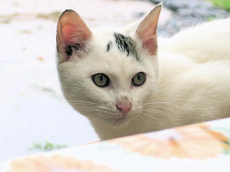 Cat Photograph - Not Me by Inga Smith