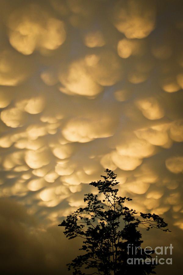 Nova Photograph - Nova Scotia Sky by Nora Blansett