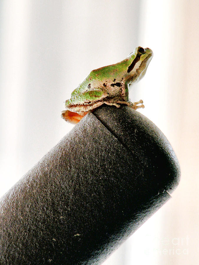 Frog Photograph - Now What? by Rory Sagner
