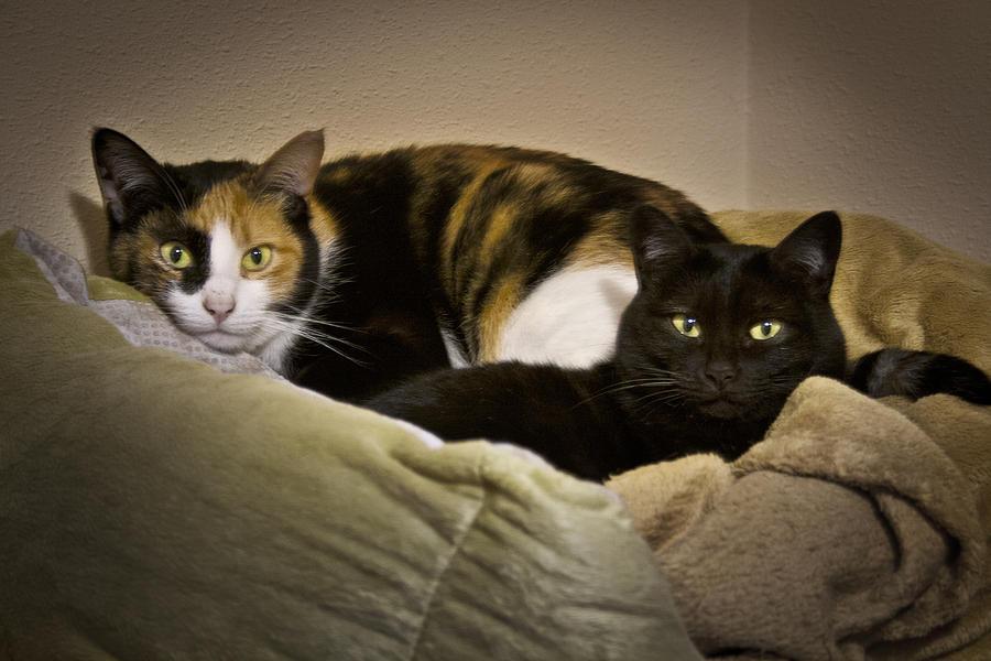 Cats Photograph - Nuimay by Zaida Ortega