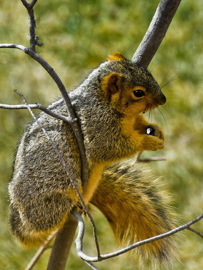 Usa Photograph - Nuts And Seeds Make A Great Lunch by LeeAnn McLaneGoetz McLaneGoetzStudioLLCcom