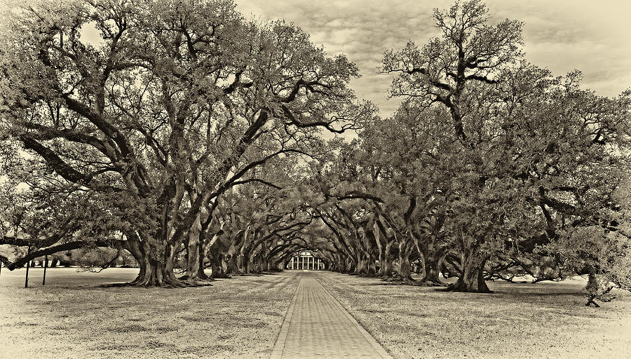 Oak Alley Plantation Photograph - Oak Alley 3 Antique Sepia by Steve Harrington