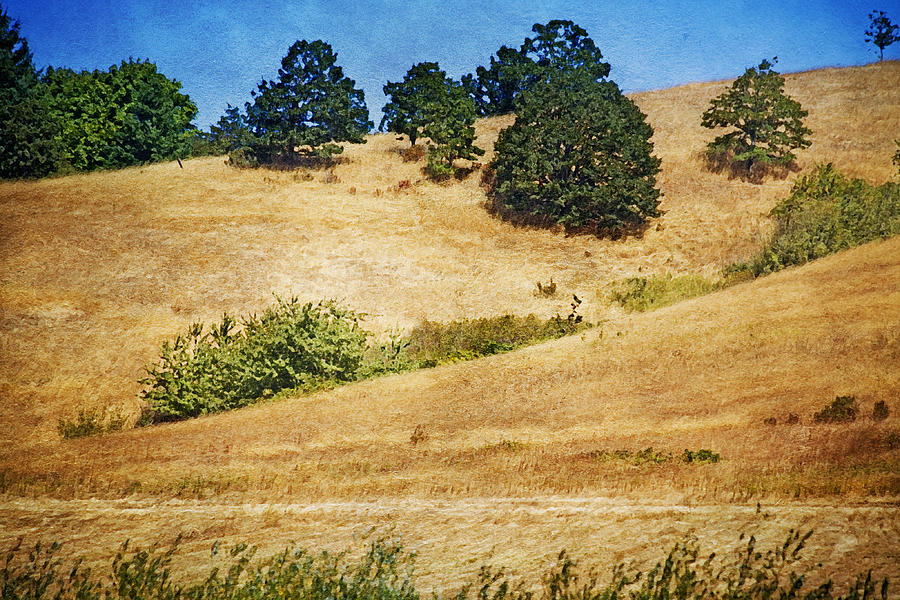 Mixed Media Photograph - Oaks On Grassy Hill by Bonnie Bruno