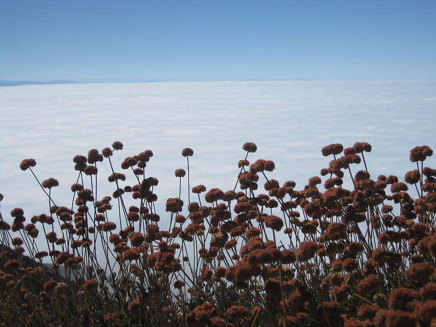 Buckwheat Photograph - Ocean Of Clouds by Diana Poe
