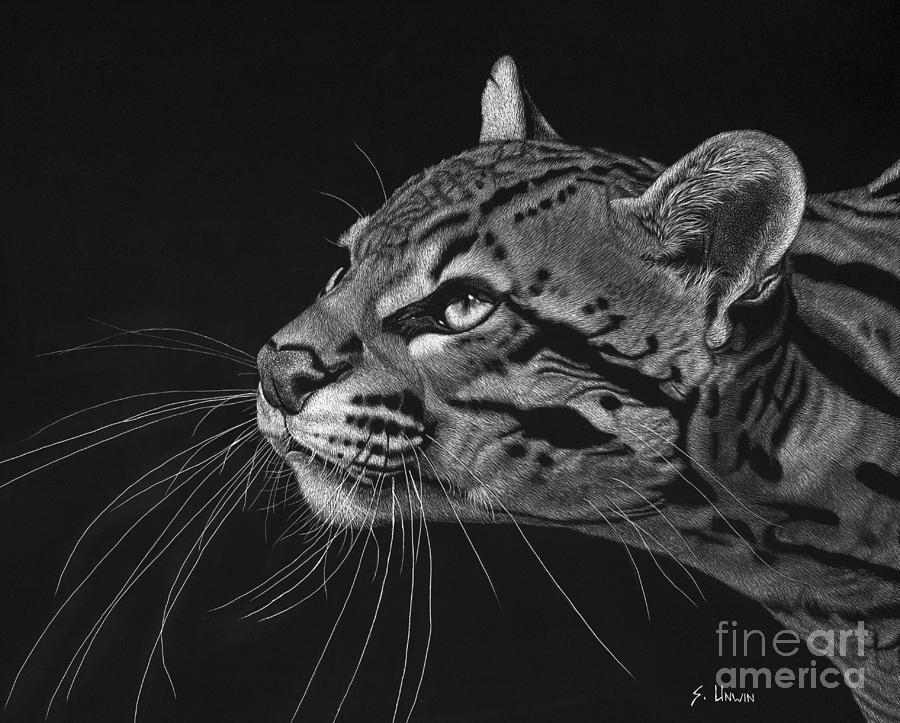 Ocelot Drawing - Ocelot by Sheryl Unwin