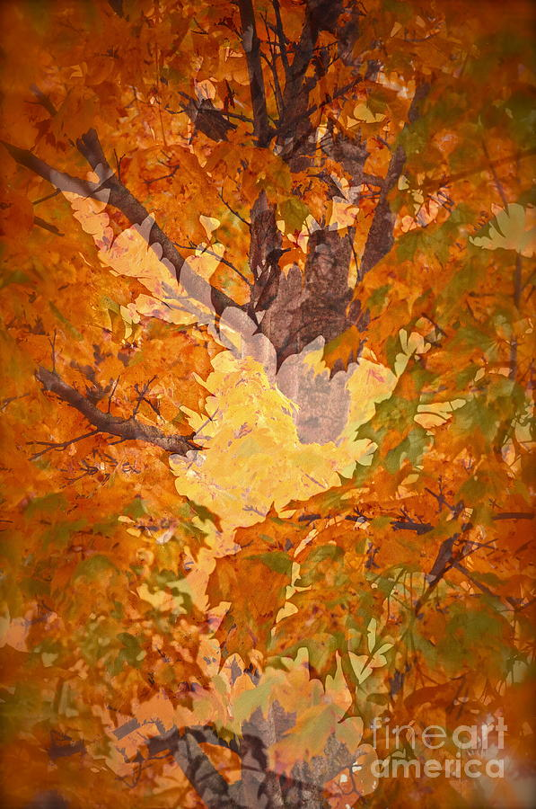 October Photograph - October In Washington by Gwyn Newcombe