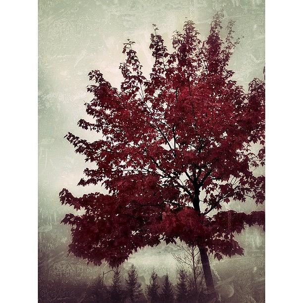 Fall Photograph - October by Natasha Marco