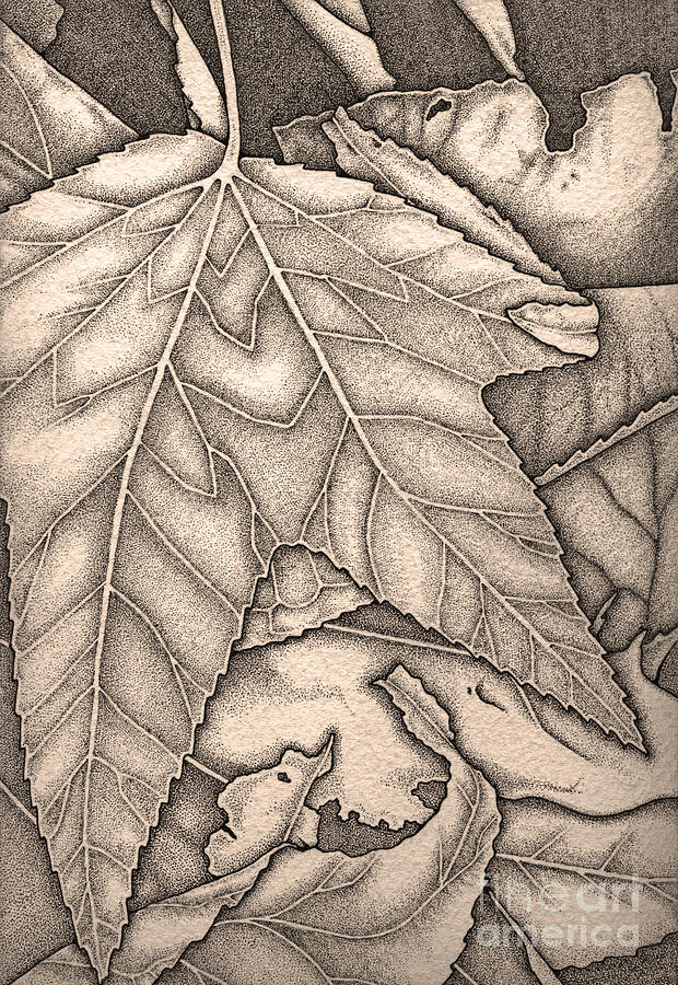 Autumn Drawing - October Sepia by Nora Blansett