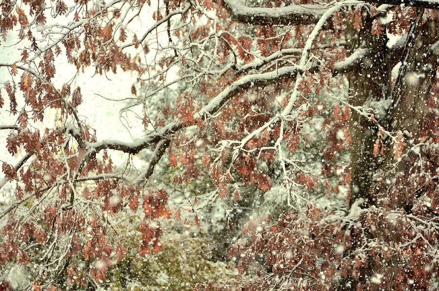 Winter Photograph - October Snowstorm by JAMART Photography