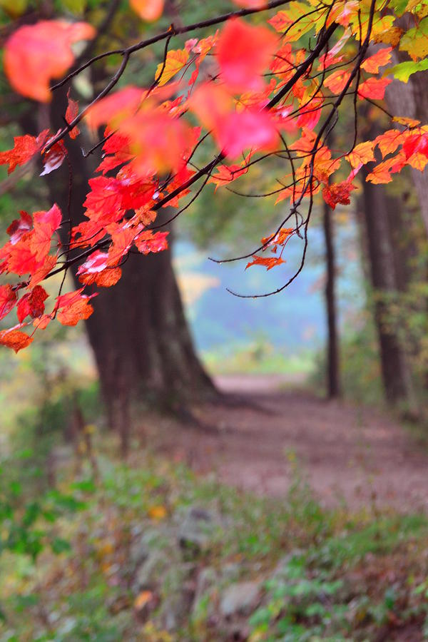 Fall Photograph - October Walk by Mandi Howard