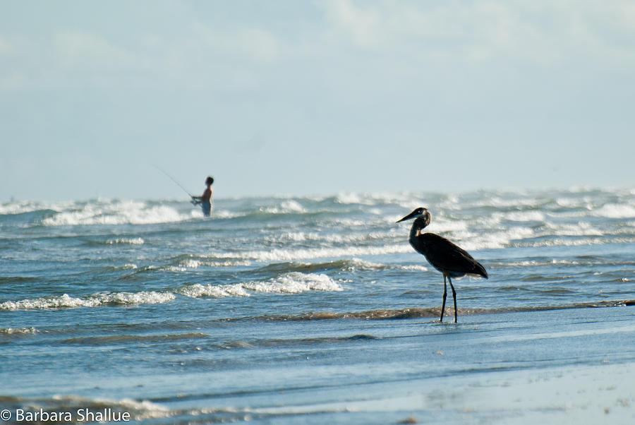 Fishing Photograph - Of Like Mind by Barbara Shallue