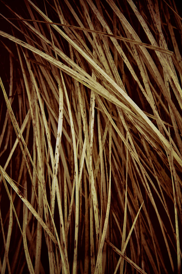 Grass Photograph - Of Needles And Haystacks by Odd Jeppesen
