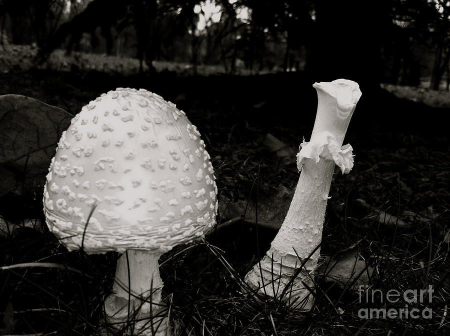 Mushrooms Photograph - Off With Your Head by Trish Hale