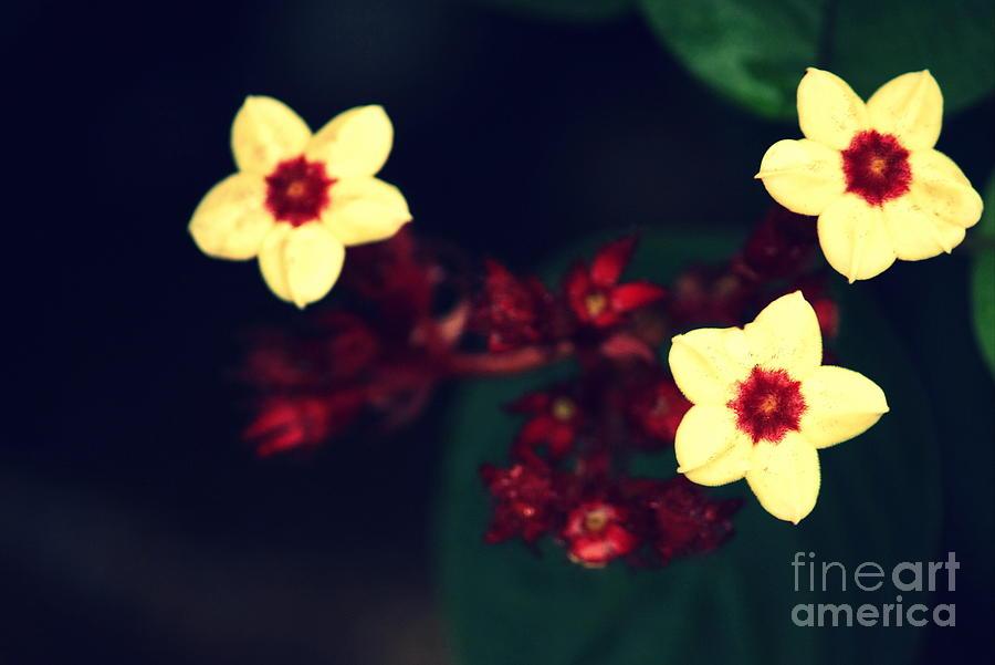 Flowers Photograph - Offering by Vishakha Bhagat