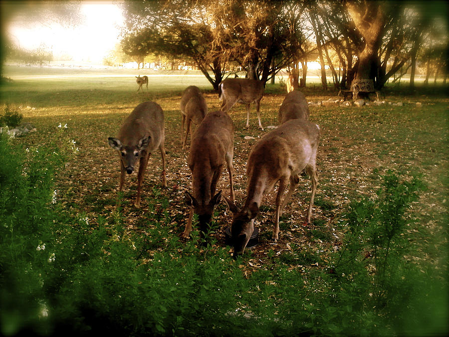 Deer Photograph - Oh Deer by Amber Hennessey