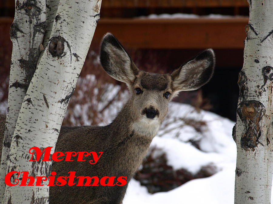 Christmas Photograph - Oh Deer Merry Christmas by DeeLon Merritt