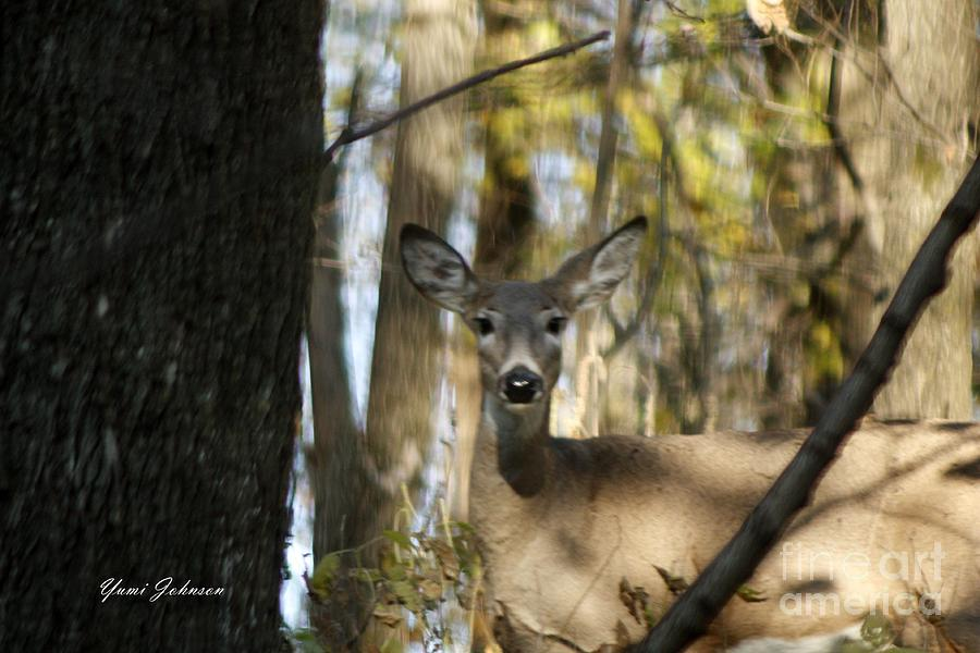 Deer Photograph - Oh Deer by Yumi Johnson